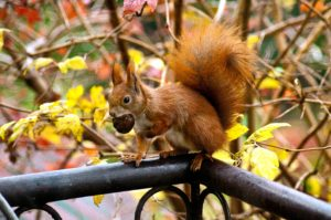 animal-autumn-cute-16484